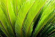 Palm Design #3