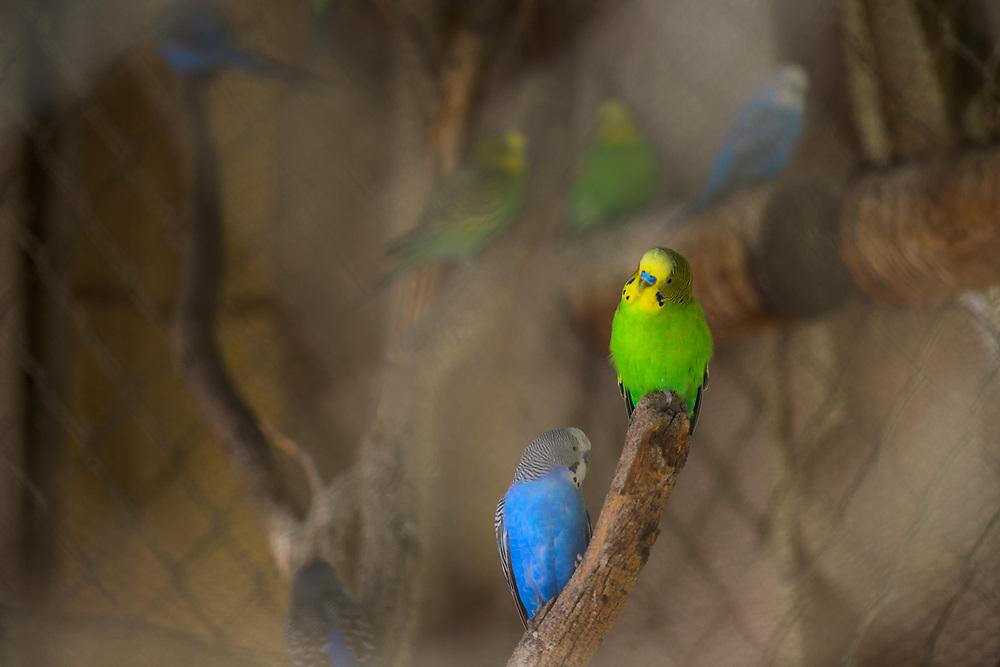 Parakeets, March, Marina Palmira, La Paz, Baja, Mexico