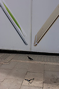 Apple iPhone ad, walking pigeon and bent fashion retailer hanger dropped on a central London side street.