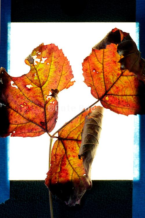 autumn season leaves