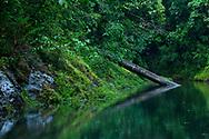 The Rio Agujitas near Punta Rio Claro National Wildlife Refuge, Costa Rica.