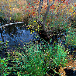 A beaver pond on a recently purchased TPL property. Goshen, CT