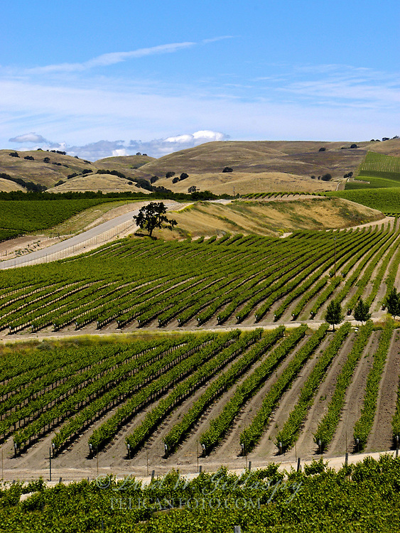 Paso Robles Vineyards - Eastside