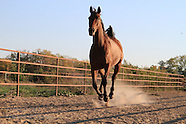 12: MISCELLANY HORSE RESCUE FARM 2