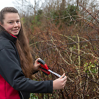 Amy Woods - Expansion rates of Japanese Knotweed in North Clare