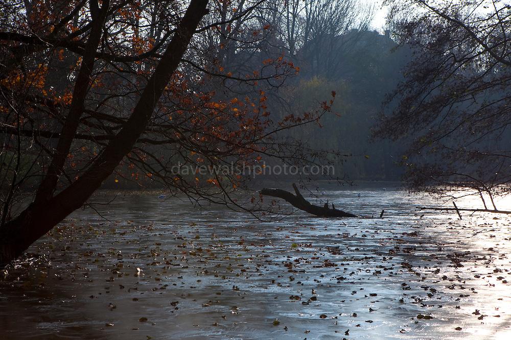Frozen pond: Winter in the Vondelpark, Amsterdam