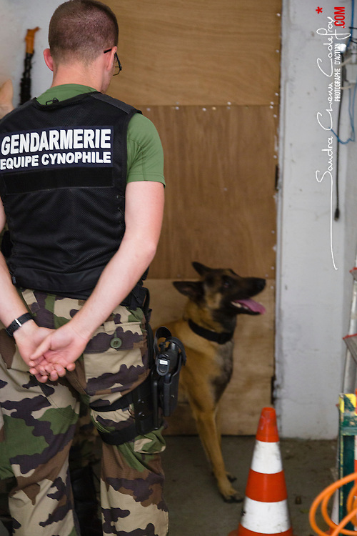 Entraînement des équipes cynophiles de la Gendarmerie Nationale. Chiens de recherche de produits stupéfiants, chiens d'attaque et de recherche de personnes.<br /> Juin 2014 / FRANCE
