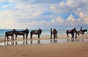 Equestrians on a beach near Kandestederne on the north west coast of Jylland in Denmark