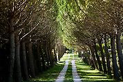 A gravel and grass driveway leading to a Chateau is lined with trees