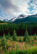 Rocky mountains - Rockies - from Icefields Parkway, Banff National Park, Alberta, Canada
