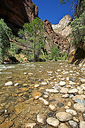 The Narrows of the East Fork of the Virgin River in Zion National Park