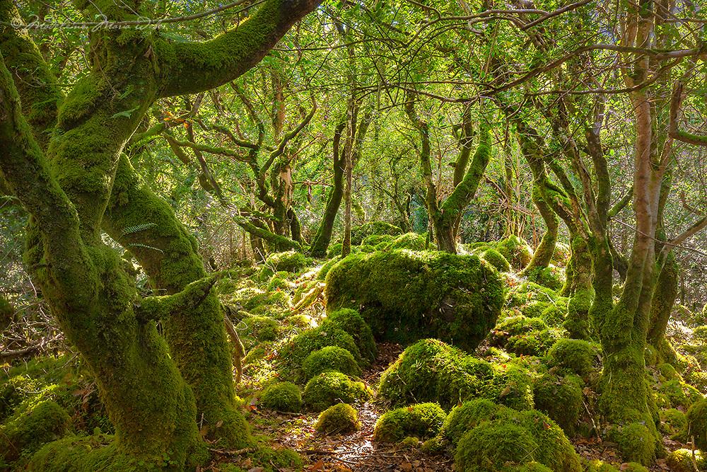 Fairytale Woodlands in County Kerry, Ireland, fr002