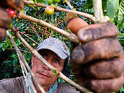 Zona Cafeteria ? Colombia - Coffee workers typically work 6 days per week from sunrise to sunset. The beans are hand picked and a source of national pride. Coffee tourism has been a huge win for Colombia's economy in recent years.