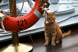 May 4, 2017 - Russia - Russia's Defense Ministry has published a photo of the first cat accompanying military voyage to Syria onboard the Moskva missile cruiser. Its name is Sergey Ivanovich. In picture: 'seaman' Sergey Ivanovich strikes the bell onboard the Moskva missile cruiser in the Mediterranean Sea. Photo from twitter.com/mod_russia (Credit Image: © Russian Look via ZUMA Wire)