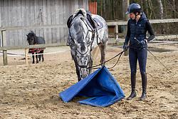 ROECKENER Lisa<br /> Bodenarbeit Ausbildung Junge Pferde<br /> Kettenkamp - Portrait Lisa Roeckener 2019<br /> Homestory und Portrait Lisa Roeckener<br /> 20. Februar 2019<br /> © www.sportfotos-lafrentz.de/Stefan Lafrentz