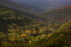 Stock photo of trees with colorful fall foliage in a valley in the Texas Hill Country