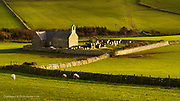 Briefly wonderful bursts of sunlight catch this unusual and very narrow church near Cemlyn. No roads connect to it, surrounded by fields, cattle & sheep usually. This afternoon it epitomised the way I and many others feel, lonely, isolated and only catching rare glimpses of hopeful light.