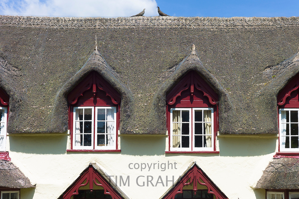 Dormer windows and thatched roof of typical quaint country cottage home at Powderham in South Devon, England, UK