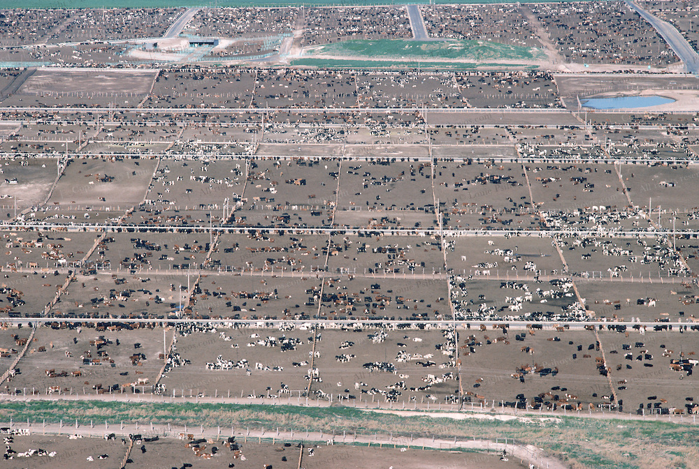 Hitches Feedlot near Guymon Oklahoma. This facility can feed up to 160,000 head of Cattle at a time. 1988