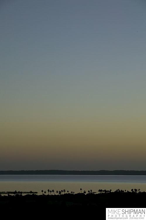 South America, Uruguay, Rocha, Laguna Negra, palmares, butia capitata, sunrise