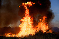 Wildfire in the Imperial Valley, California