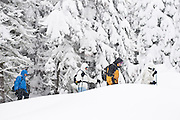 A group of adventurous tourists go on a guided snowshoe hike at Badger Pass, Yosemite
