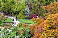 Two Tourists photographing the Fall foliage at Queen Elizabeth Park in Vancouver, British Columbia, Canada