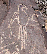 Ancestral Puebloan people chipped a macaw bird figure into the desert varnish (oxidized surface) of 200,000-year-old volcanic basalt rock, seen today on the Macaw Trail in Boca Negra Canyon, in Petroglyph National Monument, Albuquerque, New Mexico, USA.  Archeologists describe the image as made in the Rio Grande style, which developed around AD 1300. Petroglyph National Monument lies 1200 miles (via modern road) northwest of the natural range of the Scarlet Macaw in the tropical lowlands of eastern Mexico. Macaw remains unearthed at many sites (such as Wupatki, Arizona) in southwest USA indicate a Pre-Columbian trade network that connected to southeastern Mexico.