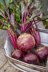 Beetroot 'Boldor' - check id - T&M pic shows it as copper skinned