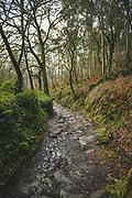 Forest path in hills - part of The Camino de Santiago, Galicia, Spain Ⓒ Davis Ulands | davisulands.com