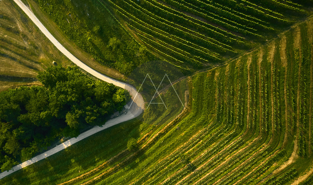 Aerial view of an odd geometric hill with a vineyard and an unpaved road in the Po Valley, Italy.