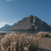 Rime Ice coats shrubs beside Bow Lake in Banff National Park, Alberta, Canada. Behind are Bow Crow Peak and Crowfoot Mountain.