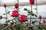 Whole Foods Rose Farms