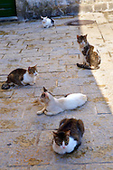 Street Cats, Kotor Montenegro .<br /> <br /> Visit our MONTENEGRO HISTORIC PLAXES PHOTO COLLECTIONS for more   photos  to download or buy as prints https://funkystock.photoshelter.com/gallery-collection/Pictures-Images-of-Montenegro-Photos-of-Montenegros-Historic-Landmark-Sites/C0000AG8SdQ.sYLU