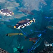 Aquarium Trade