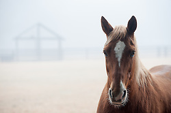 beautiful horse on a ranch in the fog