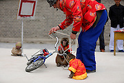 SHENYANG, CHINA - APRIL 25: (CHINA OUT) <br /> <br /> Visitors look two monkeys performing riding a bicycle in a scenic resort on April 25, 2016 in Shenyang, Liaoning Province of China.<br /> ©Exclusivepix Media