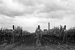 """Brindisi - cerano. vigneto con la centrale a carbone """"federico II"""" sullo sfondo"""