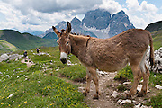 A donkey shares the trail near Monte Civetta, near Gasthaus Passo di Giau, in Dolomites (Dolomiti, a part of the Southern Limestone Alps), northern Italy, Europe. The Dolomites were declared a natural World Heritage Site (2009) by UNESCO.