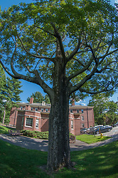 Tree and Taylor Hall, Phillips Academy, Andover, Massachusetts, US