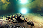 skeleton of green sea turtle, <br /> Chelonia mydas, in Turtle Cavern, <br /> Sipadan Island, Borneo, Malaysia ( Celebes Sea )