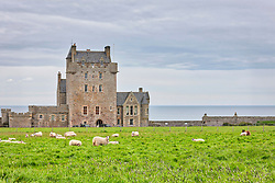 Sheep grazing on field in front of Ackergill Castle, Scotland, UK