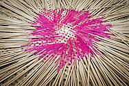 Encense sticks drying outside, Vietnam, Southeast Asia