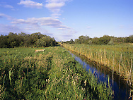 Wicken Fen, Cambridgeshire, UK