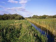 Wicken Fen, Cambridgeshire, UK