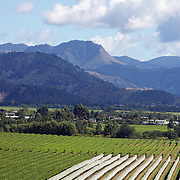The view of the vineyards in the Marlborough Wine Region from the tower at Highfield Estate WInery,  Brookby Road, Blenheim, Marlborough. New Zealand..Established in 1989, Highfield is a boutique Marlborough winery  owned by Shin Yokoi and Tom Tenuwera. . Highfield is surrounded by a beautiful five acre pinot noir block, situated on the Brookby Ridge and signposted by the iconic tower...The Marlborough wine region is New Zealand's largest wine producer. The Marlborough wine region has earned a global reputation for viticultural excellence since the 1970s. It has an enviable international reputation for producing the best Sauvignon Blanc in the world. It also makes very good Chardonnay and Riesling and is fast developing a reputation for high quality Pinot Noir. Of the region's ten thousand hectares of grapes (almost half the national crop) one third are planted in Sauvignon Blanc. Marlborough, New Zealand, 14th February 2011. Photo Tim Clayton