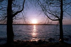 Sunset between trees at Rutland Water, Rutland, England, UK.