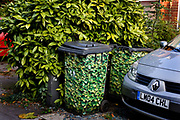 Disguised leaf patterned rubbish bins awaiting collection 13th Sept 2006, Highgate, North London United Kingdom. Rubbish is collected free as part of the house taxation and is divided into either recyclable or for land fill, but the bins are often seen as unsightly, so here are camouflaged.