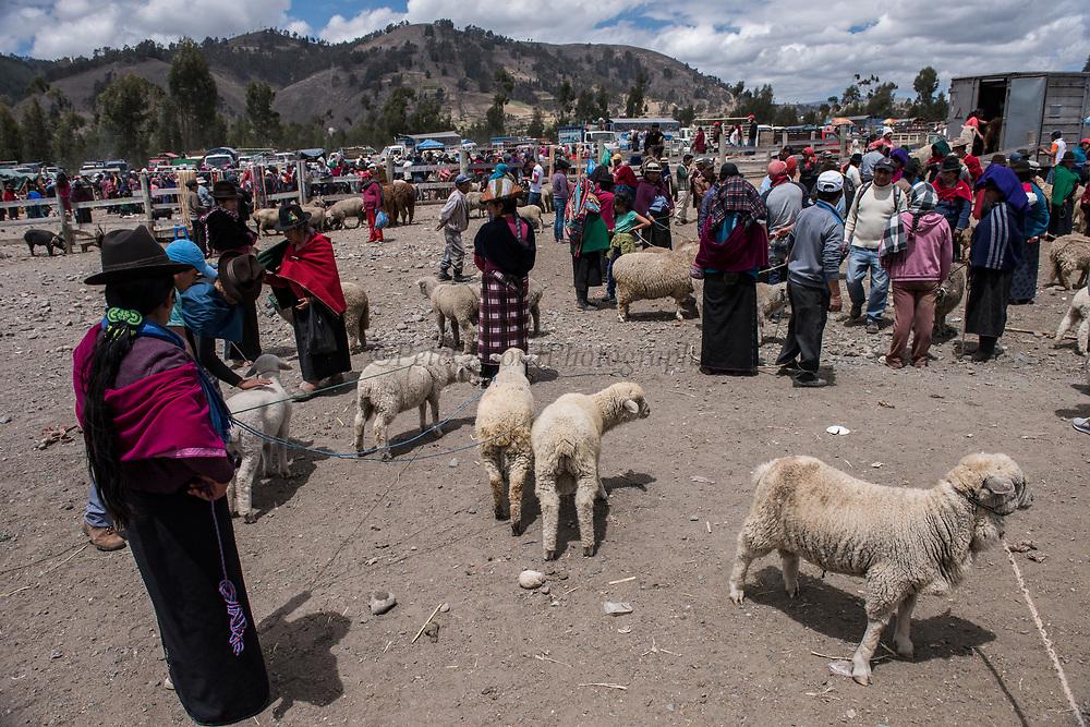 Indians & sheep<br /> Calpi animal market<br /> Parish of Riobamba, Chimborazo Province<br /> Andes<br /> ECUADOR, South America