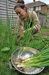 Woman picking spring onions in her back garden UK